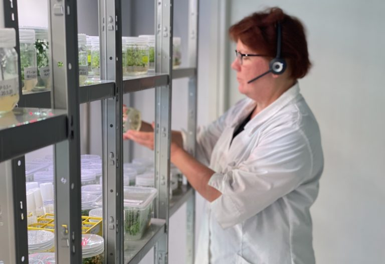 Taimiemo Oy hyödyntää Nopteraa kasvien mikrolisäyksessä