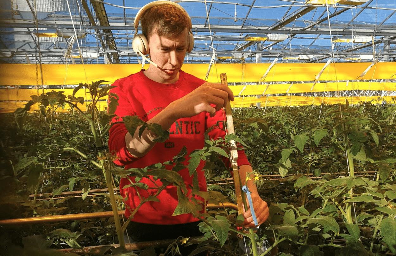 Noptera helpottaa arkea tomaattiviljelmillä